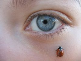 Ladybug + Eye 1 by Stickfishies-Stock