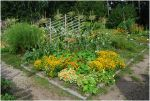 BG Colorful Garden by Eirian-stock