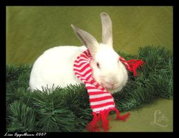 Holiday Bunny by Cillana