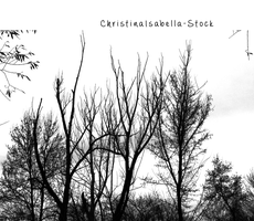 Tree silhouette Stock PNG by ChristinaIsabella