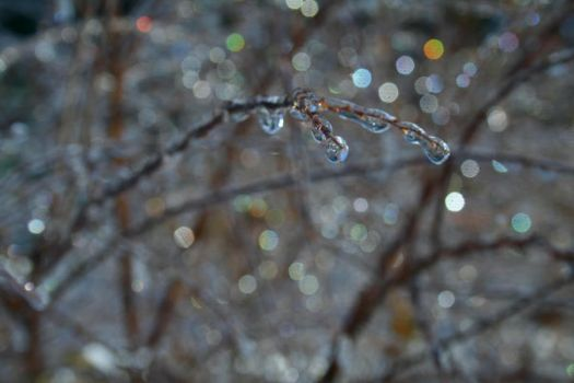 after the ice storm V by AllisonEve