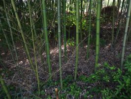 Bamboo 3 by AlissaDStock