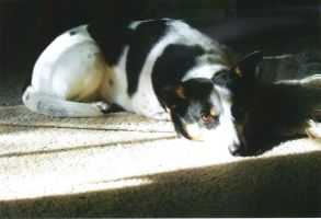 Bailey's Sunbeam - 5-22-08 by MaxWriter