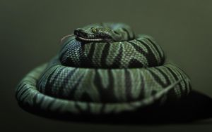 The Snake by Dbl-Dzl