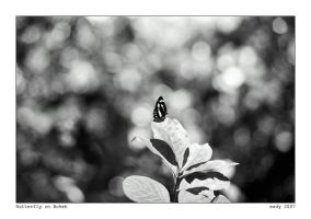 Butterfly on Bokeh by ESDY