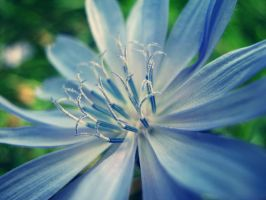 Blue flower 2 by Veronica626
