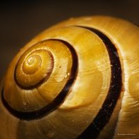 Snail House by DREAMCA7CHER