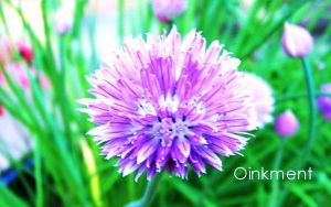 Those Chives by Oinkment