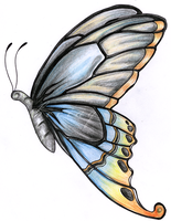 Butterfly by beciaq