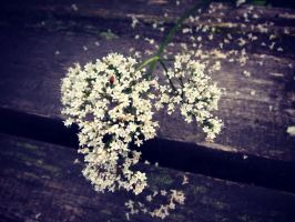 Little white flowers by PurpleScarecrow