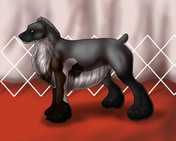 Delight on Red Carpet by ZAR-kennels