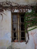 Window 4 by Anafestico