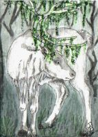 ACEO - White Reindeer by HowlingWolfSong