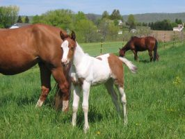 Paint Foal 3 by toristock