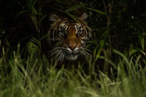Predator in the Shadows by Just-the-way-Im-not