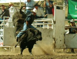 Rockley Rodeo 13 by engaged-vacancy