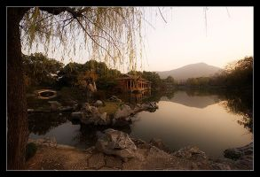tranquil chinese garden by syncore