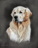 Golden Retriever by AtelierArends
