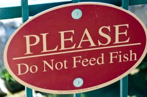 Do Not Feed Fish Sign by terryrunion
