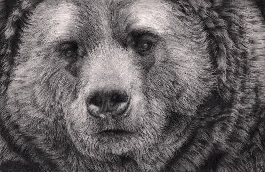 Bear by Bengtern