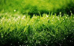 Dew by srinu619
