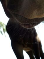 Sniffing the lens by Romydb