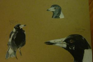 Magpies by Noodlerelleh