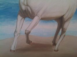 The Horse White 16 by eduaarti