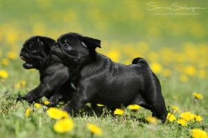 Puppy speed ON by SaNNaS