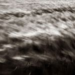 The Wind That Shook The Barley by DpressedSoul