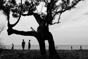 Tree Confessions by hersley