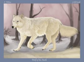 Wolf of the North by WindSeeker