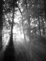 Midsummer Sunlight BW by Britwitch-1981