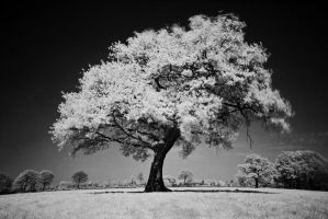 Tree by Inque78