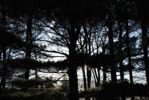 Pinescape by GillianIvy