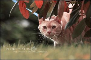 Stalker stalked by yenna-photo