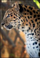 Leopard Portrait by AnxietyPatient