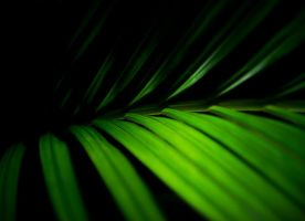 Green Darkness by SomsThinking