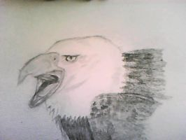 bald eagle by evildollie