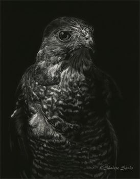 Little Hunter - Scratchboard by ShaleseSands