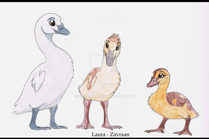 Duck Goose Swan by zavraan