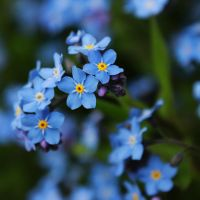 spring colors: blue by andrei-caj
