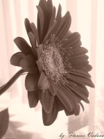 sepia flower by florina23