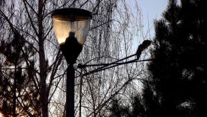 Lamppost by Zulusus