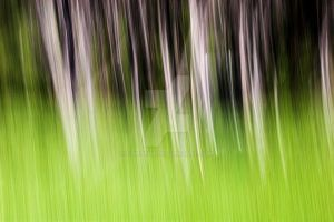 Encroaching Forest by carterr
