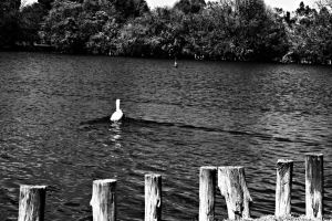Loneliness by SnaRulax