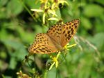 Butterfly by tinuvielluthien