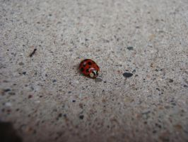 Lady Bug full of spots by NightWolf7272