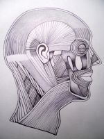 Facial Muscular Structure Ink by XpresslifeTifa