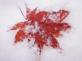 Frozen Autumn Leaves by LadyVaracolaci